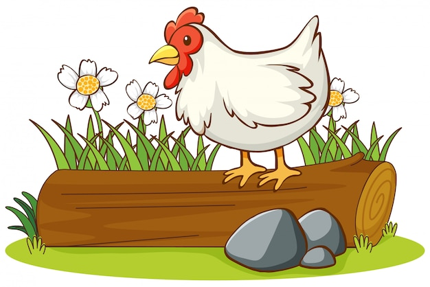 Isolated picture of chicken on the log