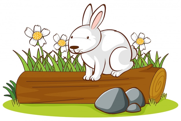 Isolated picture of cute bunny