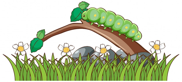 Caterpillar Cartoon Images Free Vectors Stock Photos Psd