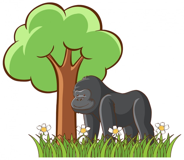 Isolated picture of gorilla