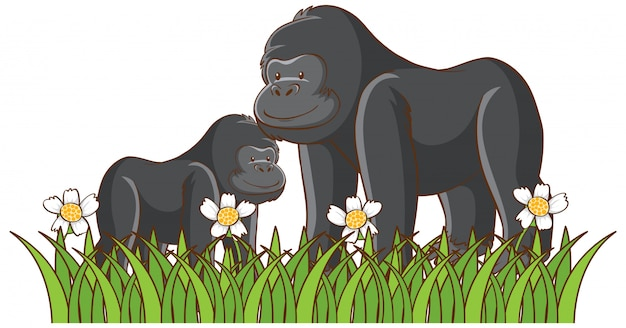 Isolated picture of gorillas in the park