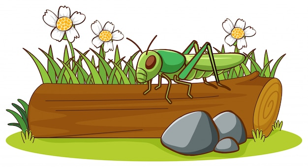 Isolated picture of grasshopper on log