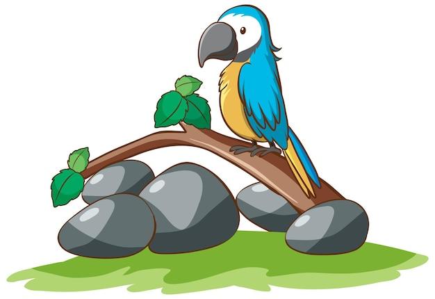 귀여운 앵무새의 고립 된 그림