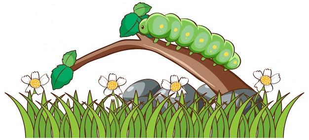 Изолированная картина жирной гусеницы на ветви