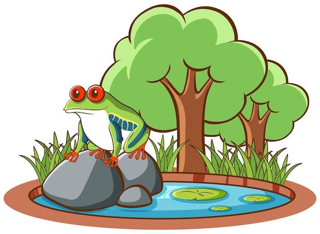 岩の上のカエルの孤立した写真