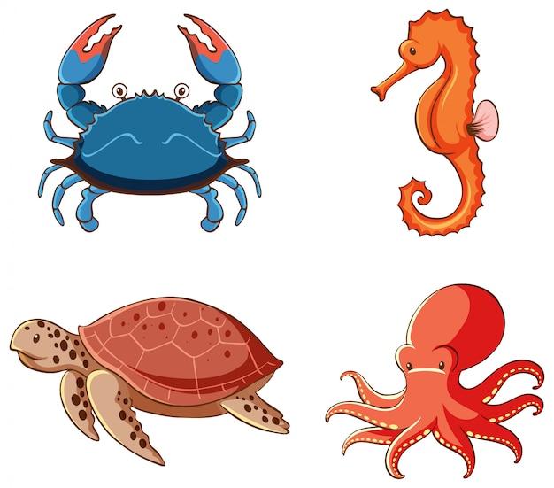 Изолированное изображение набора морских существ