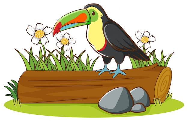 Isolated picture of toucan on the log