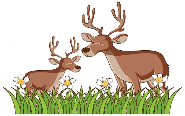 Isolated picture of two deers