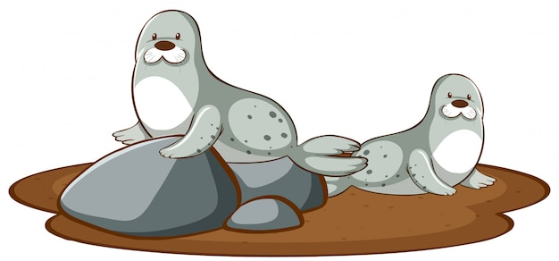 Isolated picture of two seals