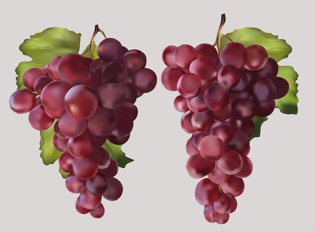 Изолированные красный виноград с зелеными листьями. винный виноград, столовый виноград. реалистичные фрукты. иллюстрация