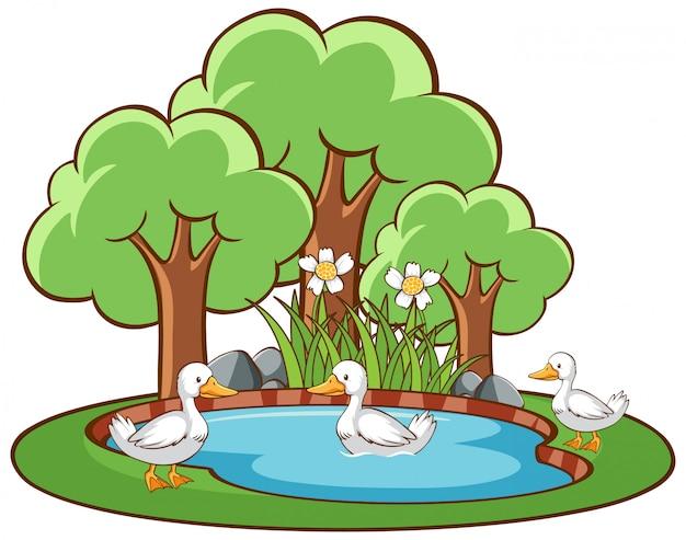 Изолированная сцена с утками в пруду
