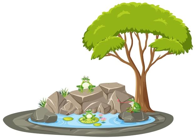 연못 주위에 많은 개구리와 격리 된 장면