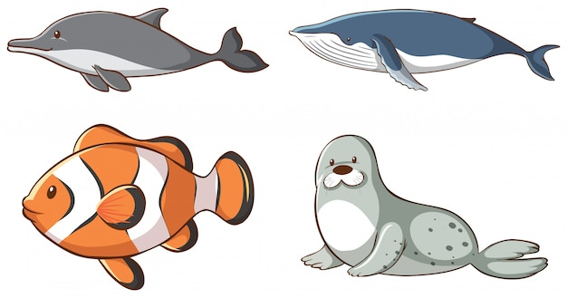Isolated sea animals