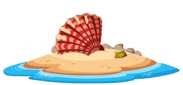 Isolated seashell on island