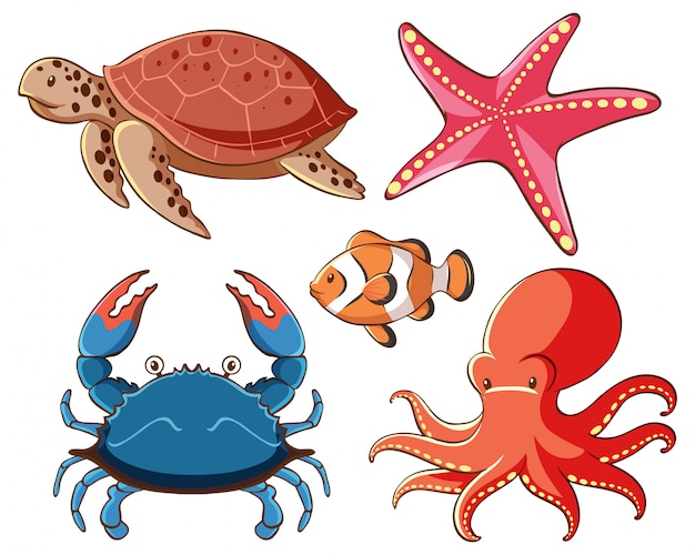 Insieme isolato degli animali di mare su fondo bianco Vettore gratuito