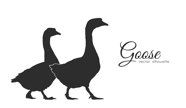 Isolated silhouette of couple geese on white background.