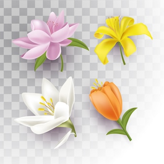 Isolated spring flowers with transparent background