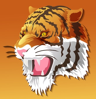 Isolated tiger head in color background.