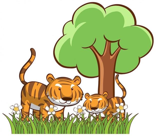 Изолированные тигры в саду