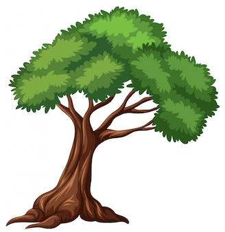 白い背景で隔離された木