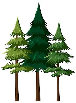 화이트에 고립 된 나무