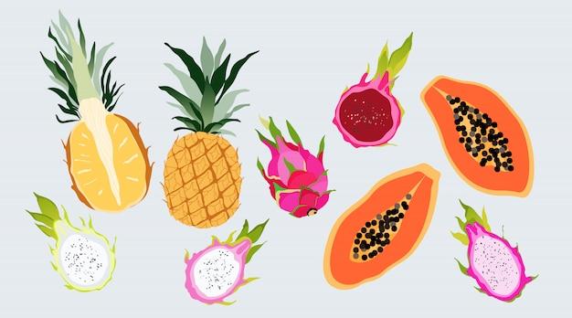 격리 된 열 대 이국적인 과일 세트입니다. 달콤한 생생한 컬러는 반 파파야, 드래곤 과일 및 파인애플로 잘립니다. 최신 유행 손 웹 및 인쇄 디자인에 대 한 그림 된 요소를 그려.