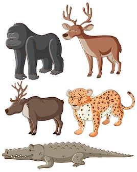 Isolated  wild animals