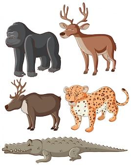 孤立した野生動物