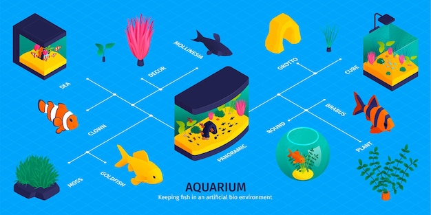 Isometric aquarium infographic with flowchart of isolated fish images aqua plants and decorations with text captions