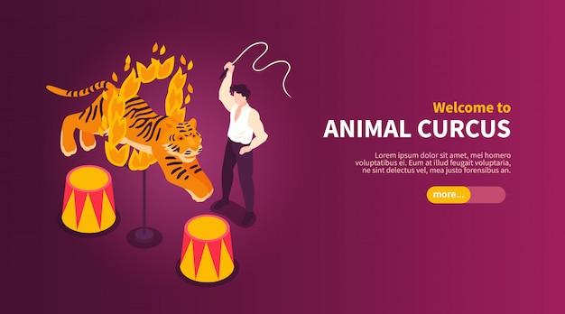 Артисты изометрического цирка показывают горизонтальный баннер с изображениями укротителя и тигра диких животных с текстовой векторной иллюстрацией