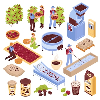 Isometric coffee production set with isolated s representing different stages of coffee bean production with people