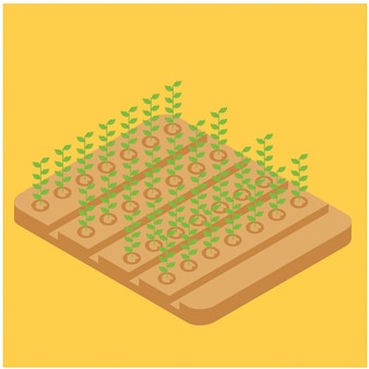 Isometric farming long beans on the field, vector illustration