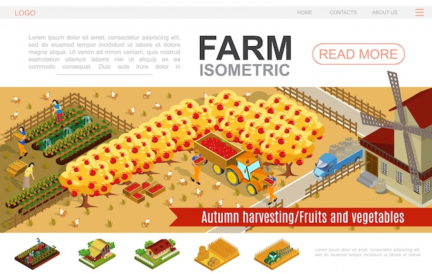 Isometric farming website template with people harvesting vegetables apples windmill tractor truck bales of hay wheat field chickens pigs