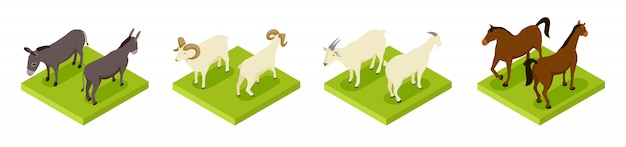 Isometric hoofed cattle.