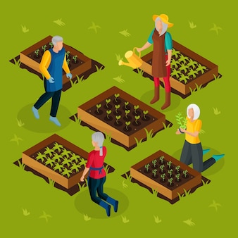 Isometric pensioners working in garden template with retired people growing and cultivating different plants vegetables