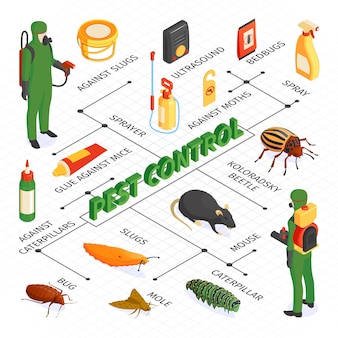 Isometric pest control flowchart composition with desinsection products sprays and glues with disinfectors vermins and text