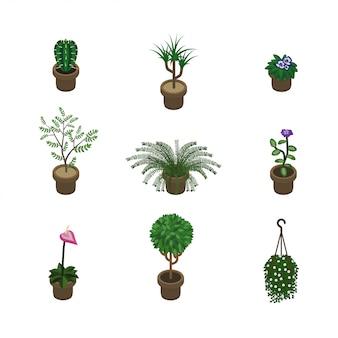 Изометрические растения
