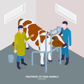 Composizione veterinaria isometrica con trattamento di testo modificabile di animali da fattoria con medico che indossa lo stetoscopio e l'illustrazione della mucca