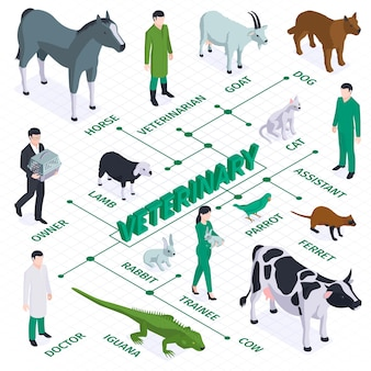 Isometric veterinary flowchart composition with isolated images of animals birds and characters of owners and doctors