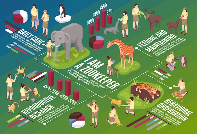 Isometric zoo workers horizontal flowchart composition with infographic icons text and images of people and animals vector oustration