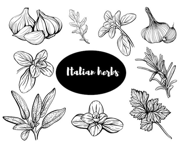Итальянские травы. набор трав. ароматные и ароматные приправы. иллюстрация. дизайн для полиграфии, упаковки, рекламы