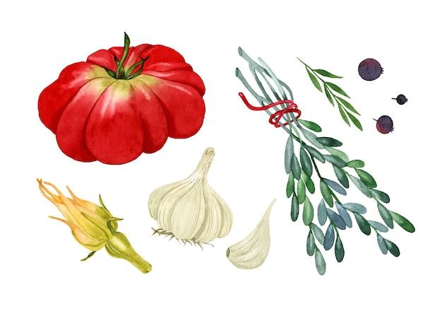 이탈리아 야채 흰색 표면에 고립 된 수채화 요소 토마토 마늘 호박 꽃 로즈마리 후추를 설정