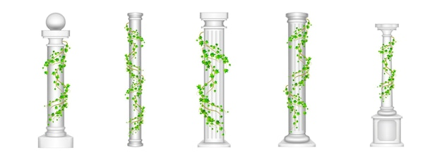 Ivy columns, antique pillars with green climbing liana plant leaves on white