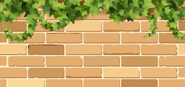 Ветви растения плюща на кирпичной стене. вьющаяся виноградная лоза