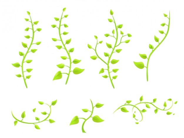 白い背景ベクトル上の葉を持つアイビー小枝