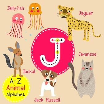 手紙j動物園のアルファベット