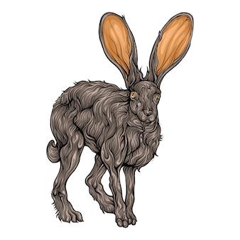 Jack rabbit animal in hand drawing