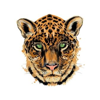 Ягуар, портрет головы леопарда из всплеск акварели, цветной рисунок, реалистичный.