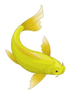 Japan's koi fish in yellow color