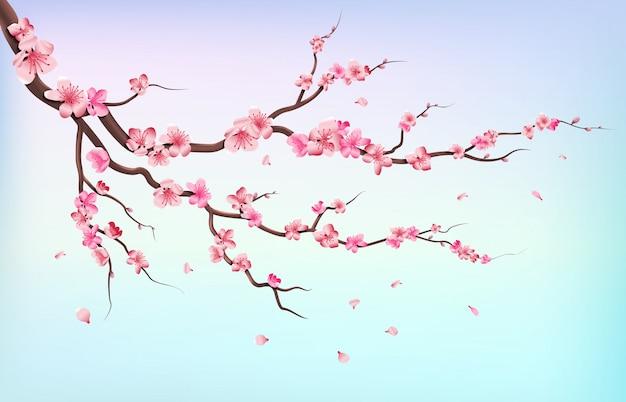 Japan sakura branches